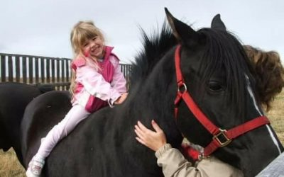 2 Pet Horses Stolen & Slaughtered for Human Consumption