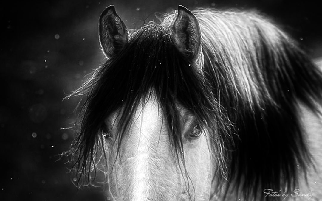Picture Gifted to BC Horse Angels to Raise Awareness and Funds